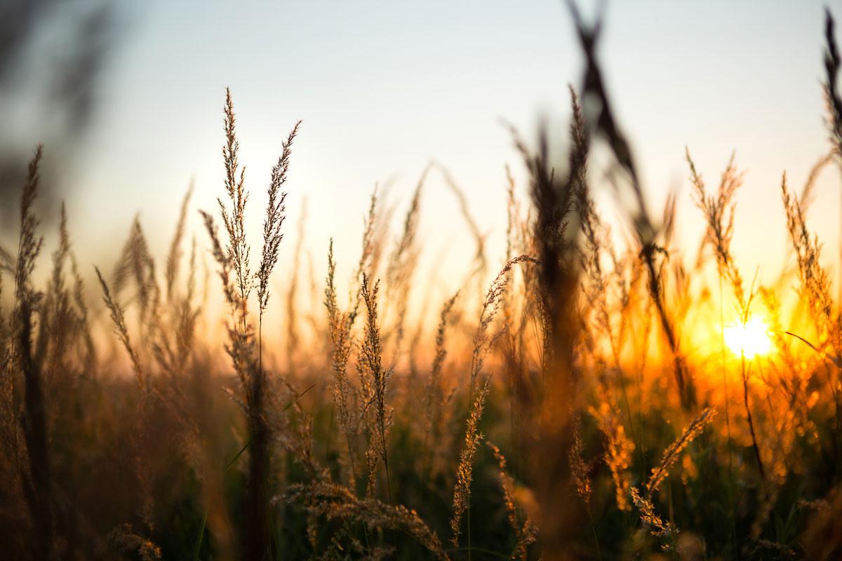 Eficiencia Energética y Energías Renovables en Instalaciones Agropecuarias